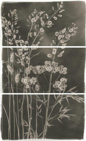 Platinum Botanicals