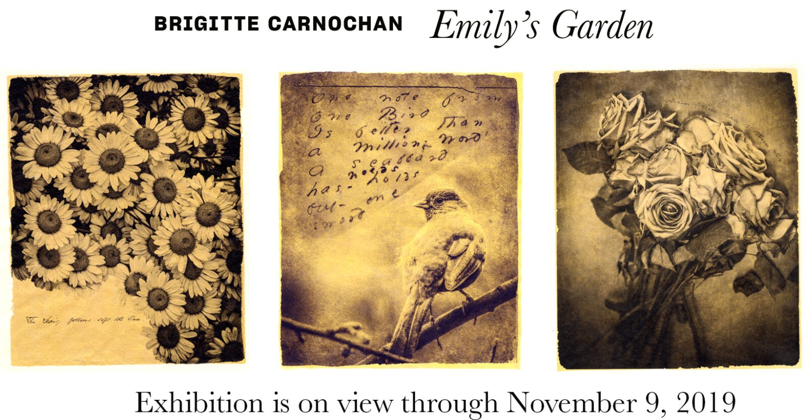 show card with info on Brigitte Carnochan's exhibition on view through November 9, 2019