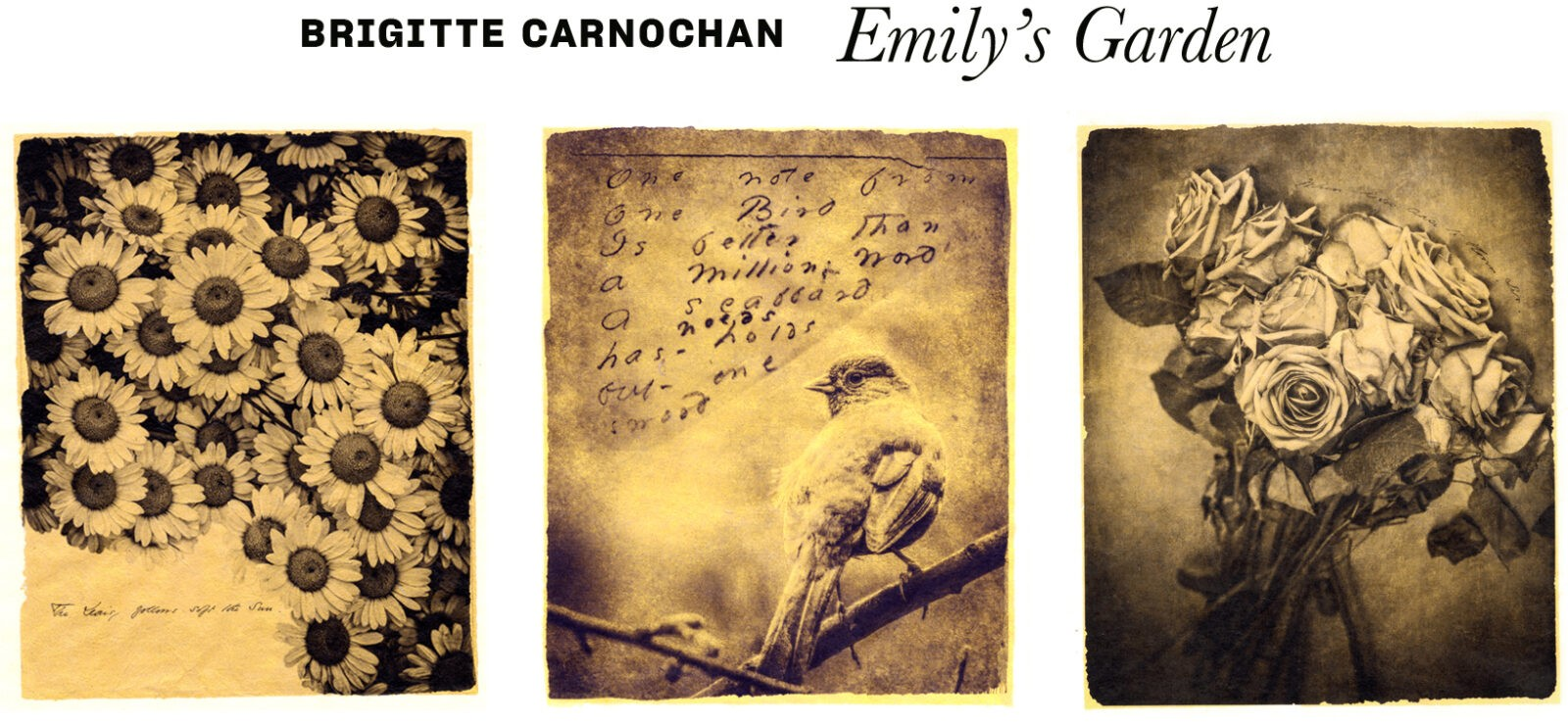 three images from Brigitte's new series, Emily's Garden.