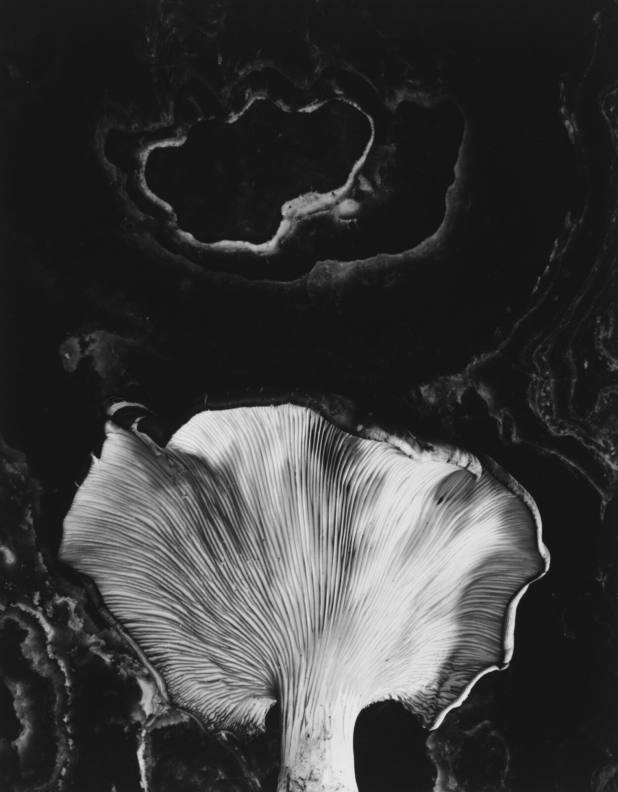image of paul caponigro's Fungus, Ipswich, MA