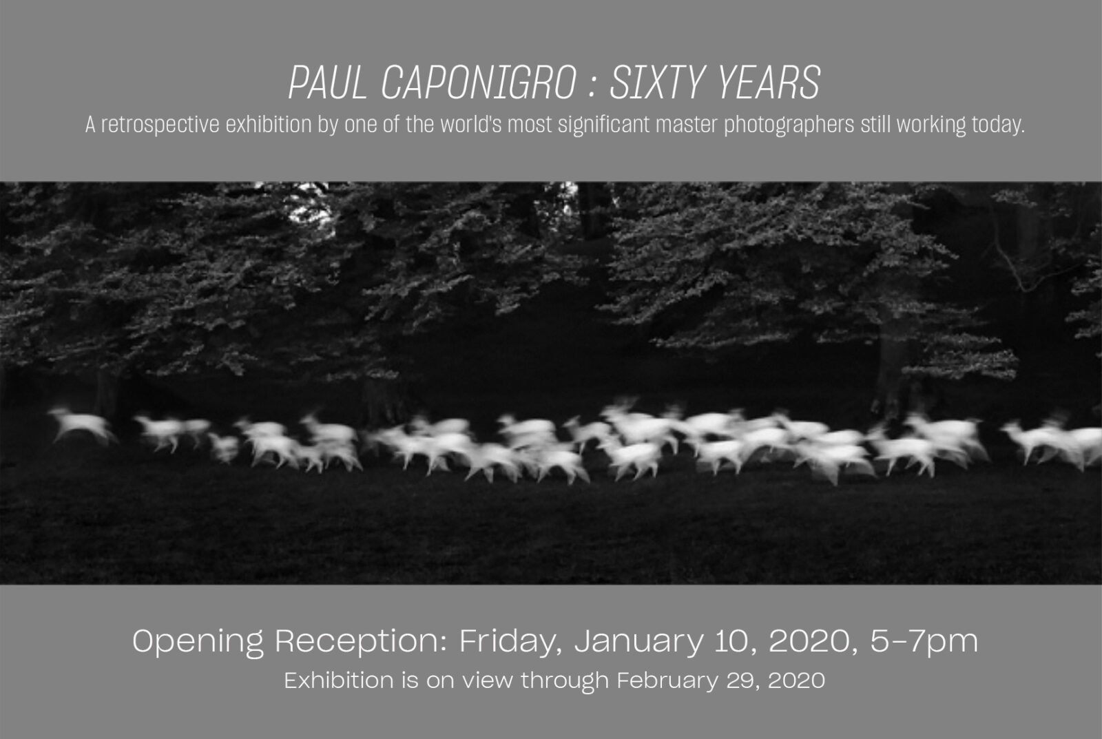 exhibition postcard with paul caponigro image of running deer and dates for exhibition, Opening reception january 10, 2020 5-7pm.